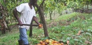 Grenada Agriculture