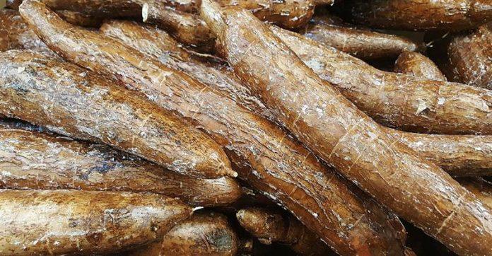 cassava-blended bread